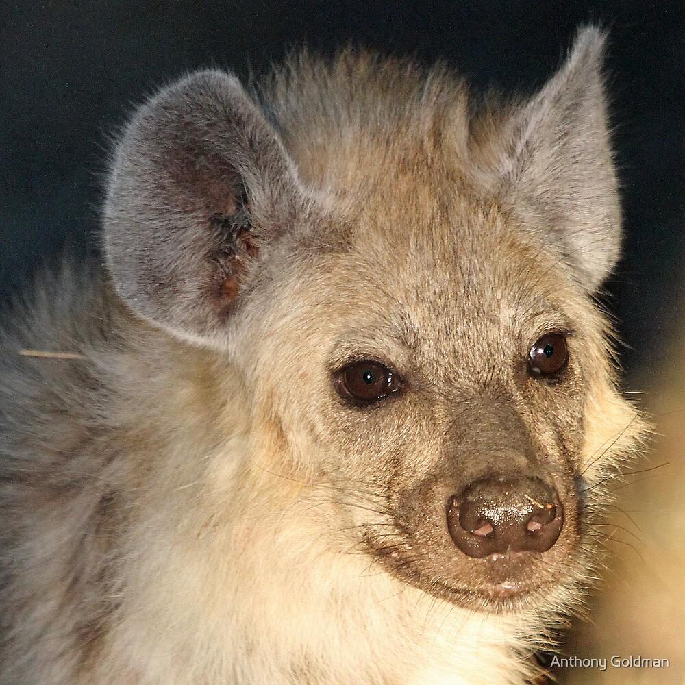 Spotted hyena up close by jozi1