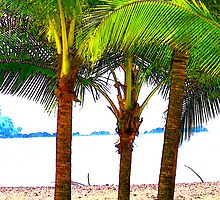 Palm Trees by SherrysCamera
