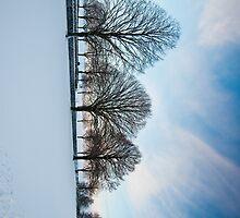 Winter by Jaime Pharr