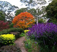 Colourful Gardens - Windyridge, Mt Wilson by Marilyn Harris