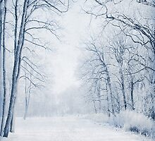 Winter Path by Svetlana Sewell