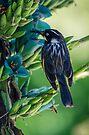 Bird and the Bee by yolanda