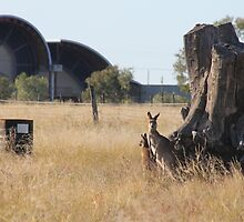 Stockmans Hall of Fame, Longreach.  Australia. by Margaret Stanton