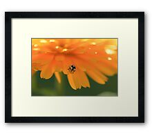 Bug - can you identify? Framed Print