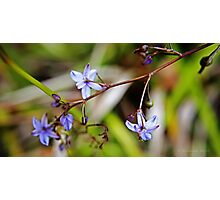 Purple and white flower  Photographic Print