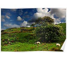 Snowdonia Sheep Poster