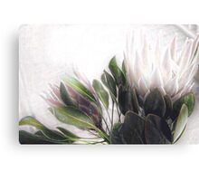 Pretty Protea Canvas Print