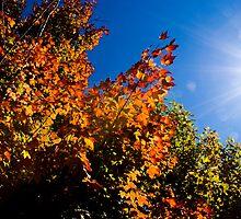 Ethereal Autumn  by Eamonn Doyle