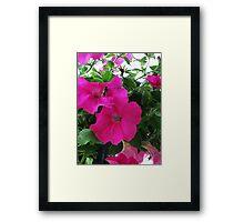 Pollination Framed Print