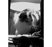 Kitten Investigator (Black and White) Photographic Print