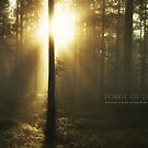 Forest of Light by Andreas Stridsberg