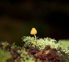 Yellow Mushroom by Alex Colcheedas