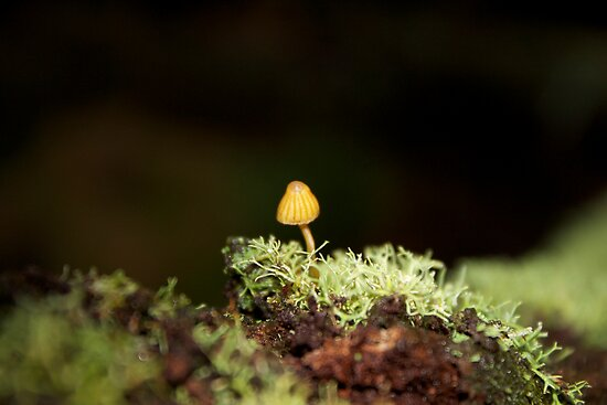 Yellow Mushroom by Alex Colcheedas