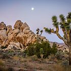 Before the dawn, Joshua Tree NP by Philip Kearney