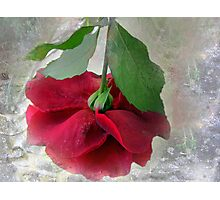 When the world seems in a jumble ... stop and smell a rose! Photographic Print