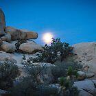 Moon setting, Joshua Tree by Philip Kearney