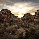 Sunrise, Joshua Tree by Philip Kearney