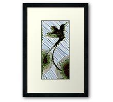 Paradiesvogel Framed Print