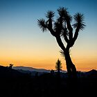 Joshua Tree Silhouette by Philip Kearney