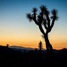 Joshua Tree Silhouette by Philip Kearney