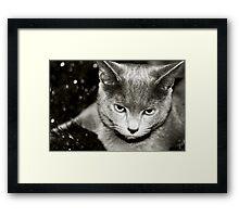 Silver Framed Print