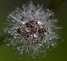 little garden-galaxy xiv by Iris Mackenzie