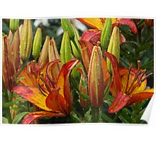 Lilies After Heavy Rain Poster