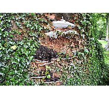 Tree Fungi At Sidmouth, Devon. Uk Photographic Print