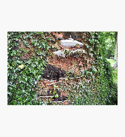 Tree Fungi At Sidmouth, Devon. Uk Photographic Print