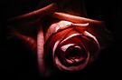 Red Rose by Nicklas Gustafsson