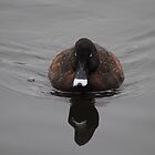 Reflection of Hardhead Duck (Aythya australis) #1 - Mill Park, Victoria by Heather Samsa