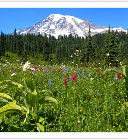 Mt. Rainier National Park Summer Wildflowers Sticker