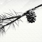 Pine in the Blizzard by pressurus