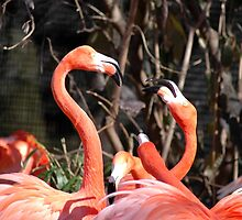 Fighting Flamingos by Elizabeth Carpenter