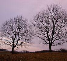 Farmland Sunset by Elizabeth Carpenter