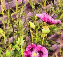 Pink Poppy Trio by Chris Thaxter