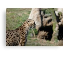 Natural Speed Canvas Print