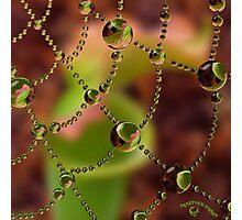 Pitcher Plant Web Drops Photographic Print