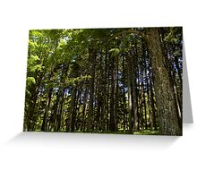 Forest Greeting Card