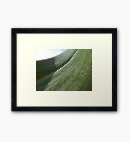 leaf close up Framed Print