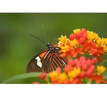 Nectar rich Photographic Print