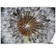Dandelion beauty Poster