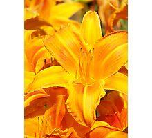 Warmth - Vibrant Yellow Flower Photographic Print