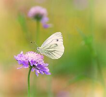 Butterfly by Aviana