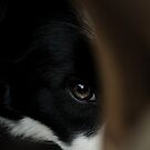 Peek-A-Boo by Amy Collinson