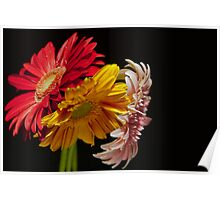 colorful gerbera Poster
