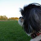 Bogie in profile by jclegge
