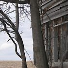 Abandoned Barn by Elizabeth Carpenter