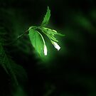 Little Light by TheCroc1979