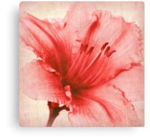 Blushing Deeply Canvas Print